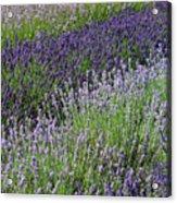 Lavender Sea Acrylic Print
