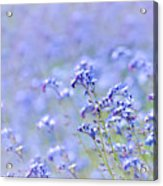 Lavender Spring Acrylic Print
