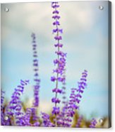 Lavender To The Sky Acrylic Print