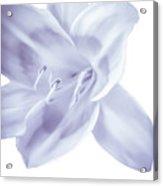 Lavender Tropic Acrylic Print