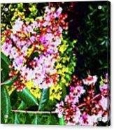 Lavender Upon Gold Acrylic Print