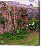 Lavender Wall In England Acrylic Print