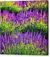 Lavenderous Harmony Acrylic Print