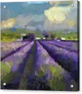 Lavenders Of South Acrylic Print