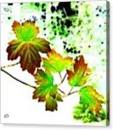 Lavish Leaves 4 Acrylic Print