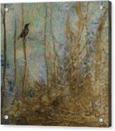 Lawbird Acrylic Print