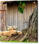 Lawnmowers At Rest Acrylic Print