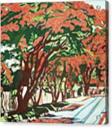 Lawson Avenue Flamboyants Acrylic Print