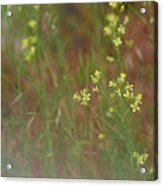 Lay In The Meadow Acrylic Print