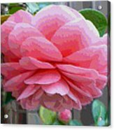 Layers Of Pink Camellia - Digital Art Acrylic Print