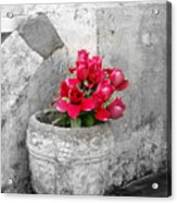 Layfayette No One Red Roses Acrylic Print