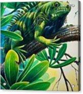 Lazin' Iguana Acrylic Print
