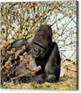Lazing On A Sunny Afternoon Acrylic Print
