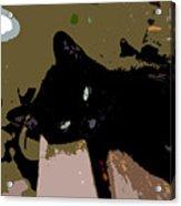 Lazy Cat Acrylic Print