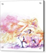 Lazy Days - Lion Acrylic Print