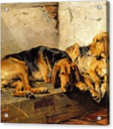 Lazy Moments Acrylic Print by John Sargent Noble