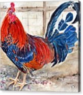 Le Chantecler- King Of The Roost Acrylic Print
