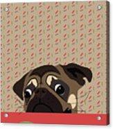 Le Pug Et Le Macaron Acrylic Print