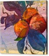 Le Temps Des Oranges Acrylic Print