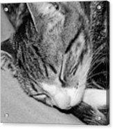 Lea Sleepy Cat Acrylic Print