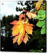 Leading The Way Into Fall Acrylic Print