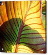 Leaf 1 Acrylic Print