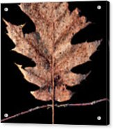 Leaf 22 Acrylic Print