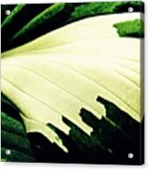 Leaf Abstract 7 Acrylic Print
