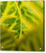 Leaf Abstract Acrylic Print