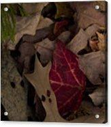 Leaf Collage Acrylic Print