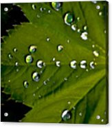 Leaf Covered In Raindrops Acrylic Print