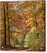 Leaf Covered Path Acrylic Print by Kathy DesJardins