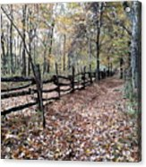 Leaf Covered Trail Acrylic Print