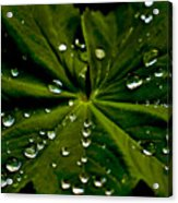 Leaf Covered With Water Droplets Acrylic Print