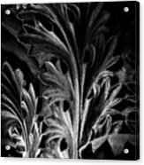 Leaf Detail 2 Black And White Acrylic Print