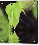 Leaf Drop Acrylic Print