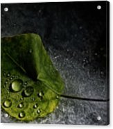 Leaf Droplets Acrylic Print