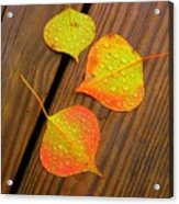 Leaf Drops 2 Acrylic Print