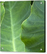 Leaf Edges Acrylic Print