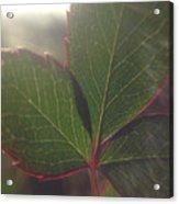 Leaf Flare Acrylic Print