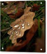 Leaf In Autumn. Acrylic Print