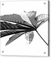 Leaf In Black And White Acrylic Print