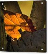 Leaf In Fork Acrylic Print