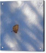 Leaf In Shadows Acrylic Print