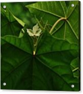 Leaf In The Middle Acrylic Print