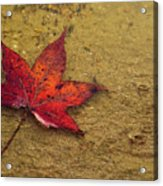 Leaf In The Rain Nature Photograph Acrylic Print