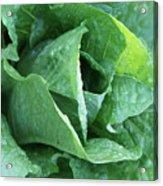 Leaf Lettuce Part 4 Acrylic Print