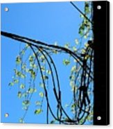 Leaf Lines Acrylic Print