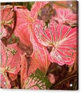Leaf Of Color Acrylic Print