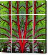 Leaf Of Life Acrylic Print